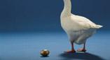 duck duck duck goose